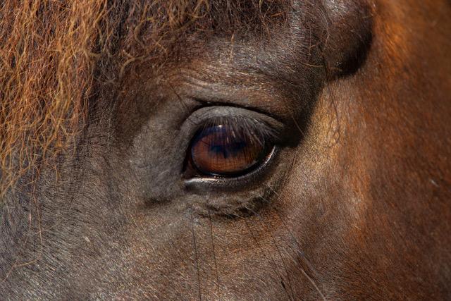 paard oog goliath 3