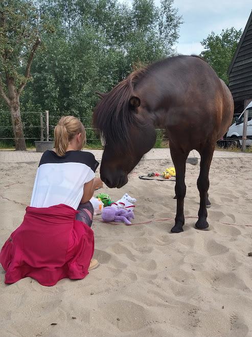 klant paardencoaching surtur