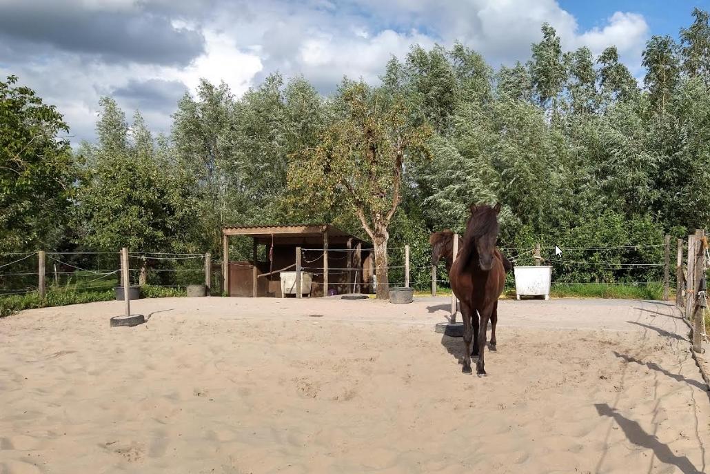 hestur coaching locatie zandbak